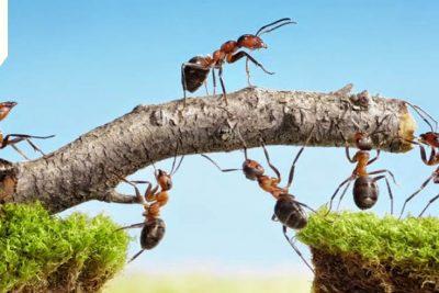 Sáu không hợp tác, bảy không kết giao, bốn người nhất định phải làm bạn